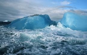 snow, penguins, Antarctica, animals, nature, waves