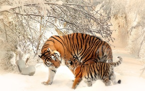 winter, baby animals, animals, snow, tiger, nature