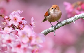 nature, pink flowers, birds, depth of field, flowers, animals