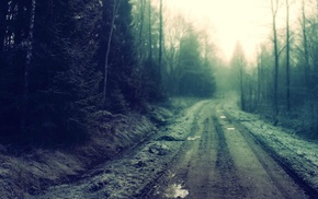 forest clearing, forest, road
