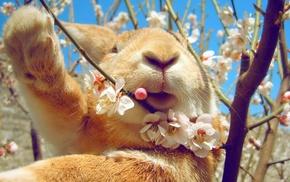animals, nature, rabbits