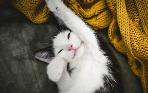 cat, fabric, stretching, animals