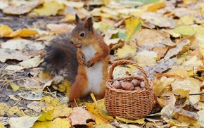 squirrel, baskets, acorns, leaves, animals, nature