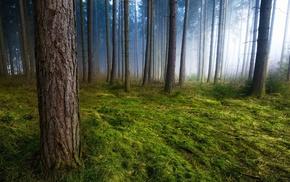 green, sunlight, grass, mist, trees, landscape