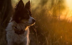 animals, twigs, sunlight, dog