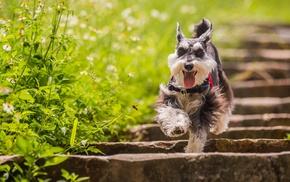 dog, depth of field, daisies, plants, running, animals