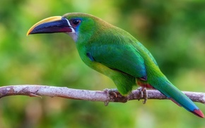 wildlife, birds, nature, animals