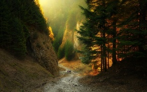 sunlight, canyon, landscape, nature, forest, mountain