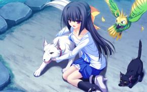 cat, anime girls, visual novel, schoolgirls, dog, Minase Yukari