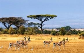 Africa, wildlife, nature, savannah, landscape, animals