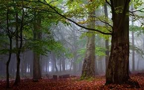 forest, landscape, leaves, trees, mist, morning