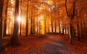 dirt road, morning, fall, trees, forest, sunlight