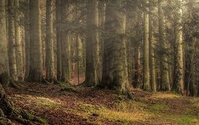 path, forest, sun rays, leaves, sunlight, grass