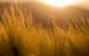 nature, filter, orange, photography, field, sun rays