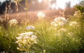 filter, grass, field, photography, nature, sun rays