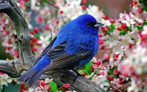animals, nature, birds