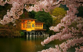 flowers, lake, pink, trees, nature, cherry blossom