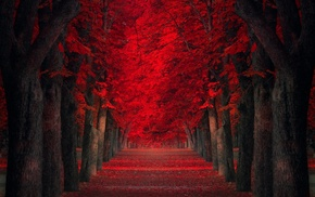 red leaves, path, trees, landscape, red, park
