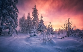 cold, Germany, winter, sunrise, white, yellow