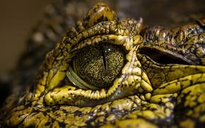 crocodiles, eyes, animals, reptile