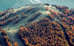 trees, landscape, tilt shift, blurred, nature, forest