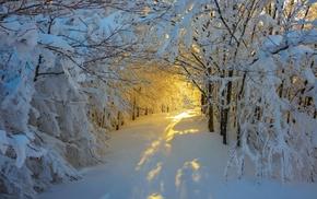 Italy, winter, trees, yellow, sunrise, white