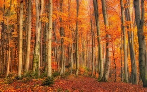 orange, gold, leaves, trees, fall, landscape