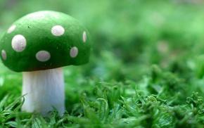 magic mushrooms, mushroom
