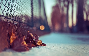 leaves, bokeh, photography, fence