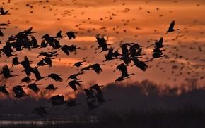 birds, nature, animals