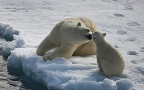 nature, animals, ice, baby animals, bears
