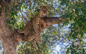 trees, bokeh, leopard, nature, animals