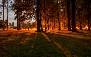 city, nature, orange, trees, grass, lights
