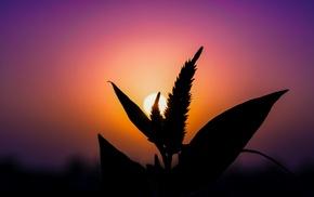 silhouette, sunset, plants