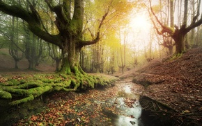 landscape, trees, Spain, forest, creeks, sunrise