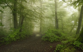 path, mist, morning, shrubs, dirt road, forest