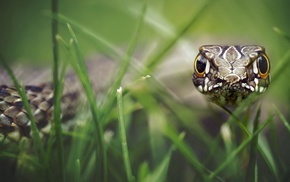 snake, macro, animals, nature, reptile, depth of field