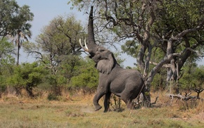 Africa, trees, wilderness, animals, landscape, elephants