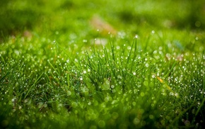 depth of field, grass, bokeh, field, nature, leaves