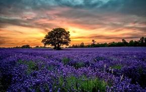 sunset, nature, landscape, lavender