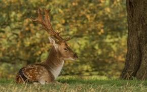 nature, deer, animals