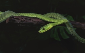 reptile, animals, snake, nature