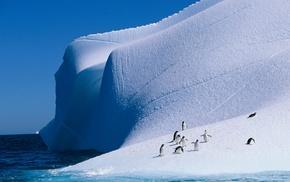 iceberg, ice, nature, penguins, landscape, animals