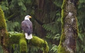 nature, eagle, wildlife, birds, animals
