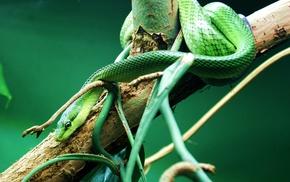 snake, branch, reptile