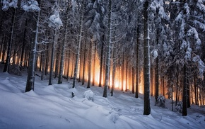forest, winter, white, trees, Germany, yellow