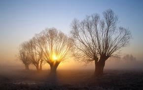 frost, mist, landscape, trees, nature, sunrise