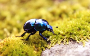 insect, beetles, animals, moss