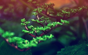 blurred, plants, bonsai, green, nature