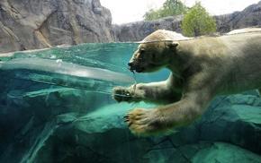 split view, ice, polar bears, animals, swimming